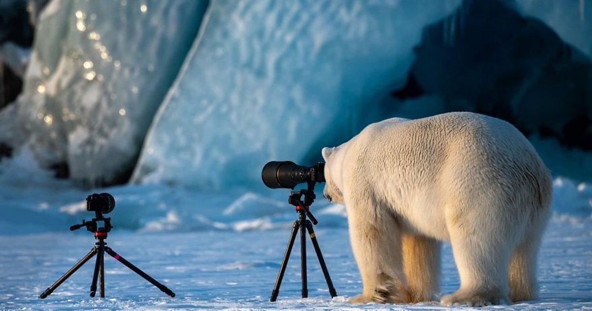 eca09cebaaa9 ec9786ec9d8c 1.png?resize=412,232 - 우연의 일치가 잡아낸 신기하고 웃음을 주는 야생의 동물 사진들.jpg