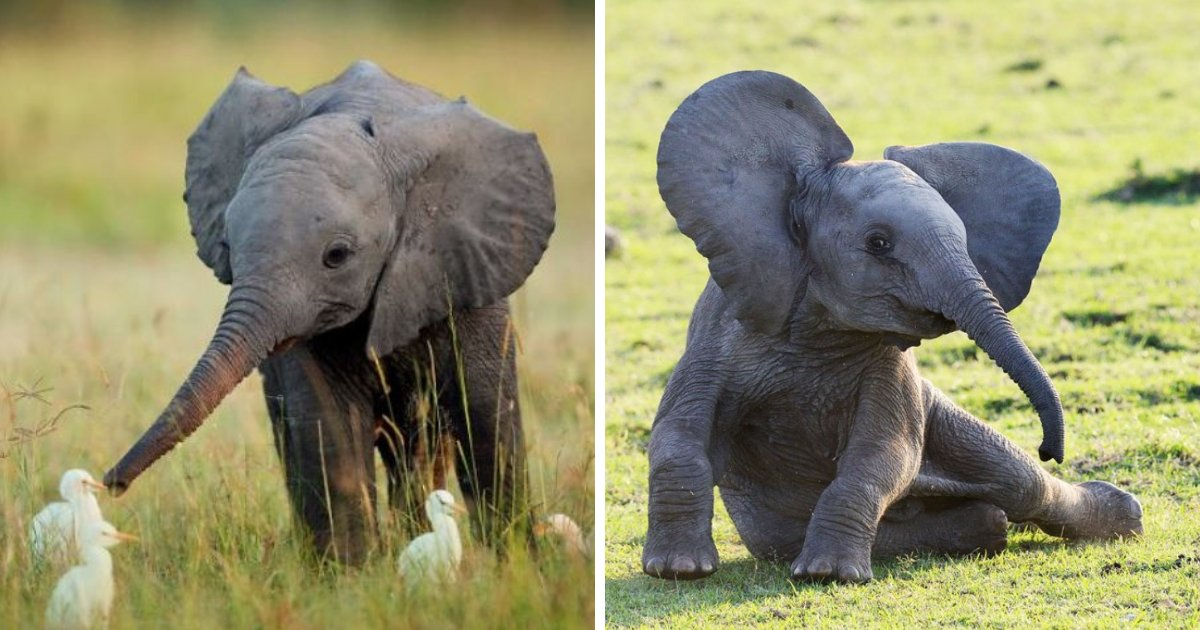 elephants.png?resize=412,232 - 10+ Photos Of Adorable Baby Elephants To Brighten Up Your Day
