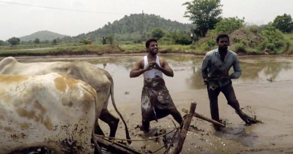 featured image 10.jpg?resize=1200,630 - Dois fazendeiros indianos realizam desafio de maneira hilária em meio à bois e lamaçal