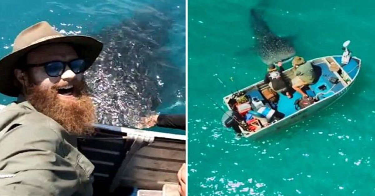 featured image 36.jpg?resize=1200,630 - Moment incroyable: un requin-baleine de 6 mètres entoure les pêcheurs sur un petit bateau avant de les laisser le tapoter sur la tête