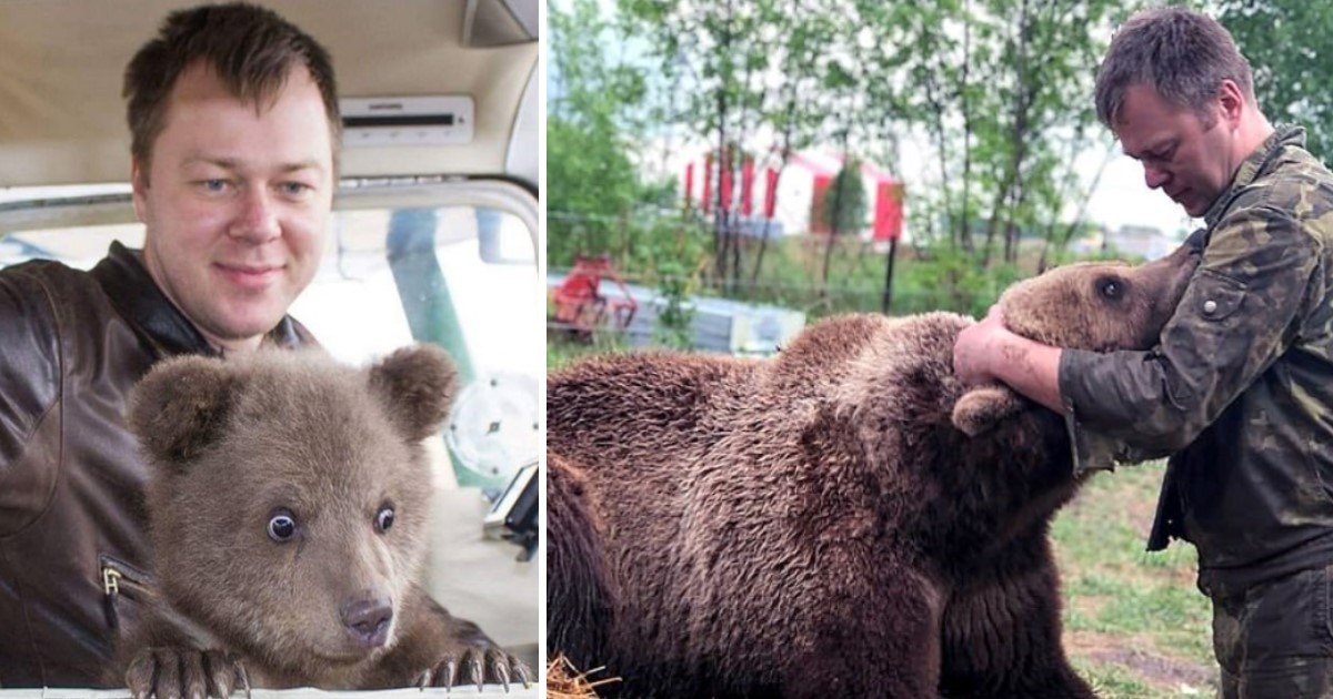 featured image 71.jpg?resize=636,358 - Russian Pilots, Who Rescued Bear As A Cub, Rescue Him AGAIN After Learning He Was Being Used For Bear-Baiting