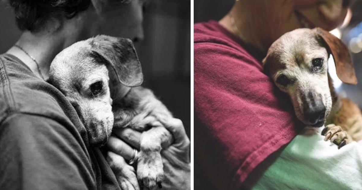 featured image 9.jpg?resize=1200,630 - Un photographe partage les images d'un vieux teckel avant qu'il soit nécessaire de l'euthanasier - mais l'histoire ne s'arrête pas là