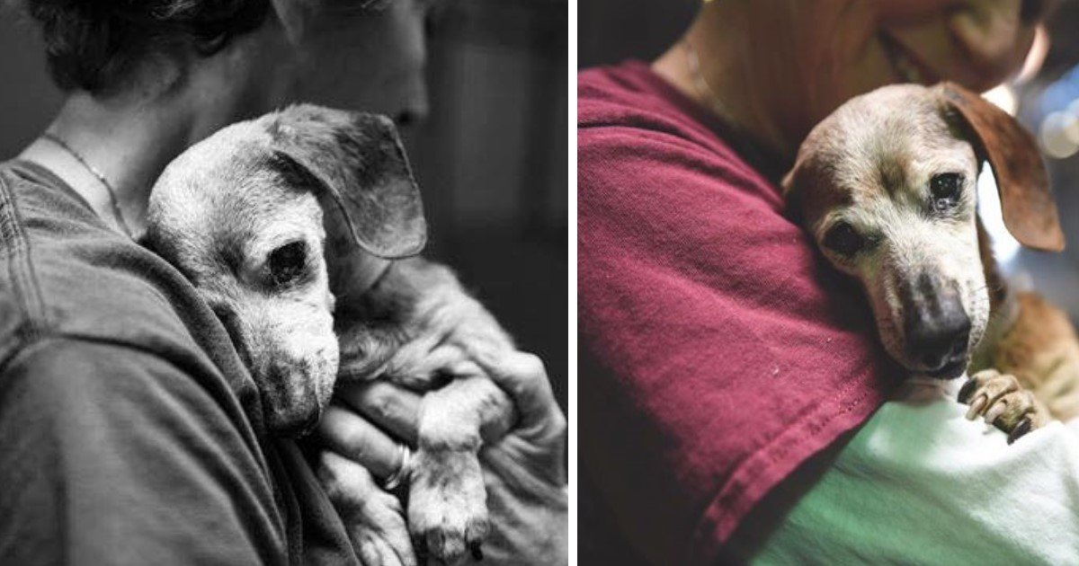 featured image 9.jpg?resize=636,358 - Photographer Shares Pics Of Old Dachshund Before It's To Be Euthanized - But The Tide Soon Turns