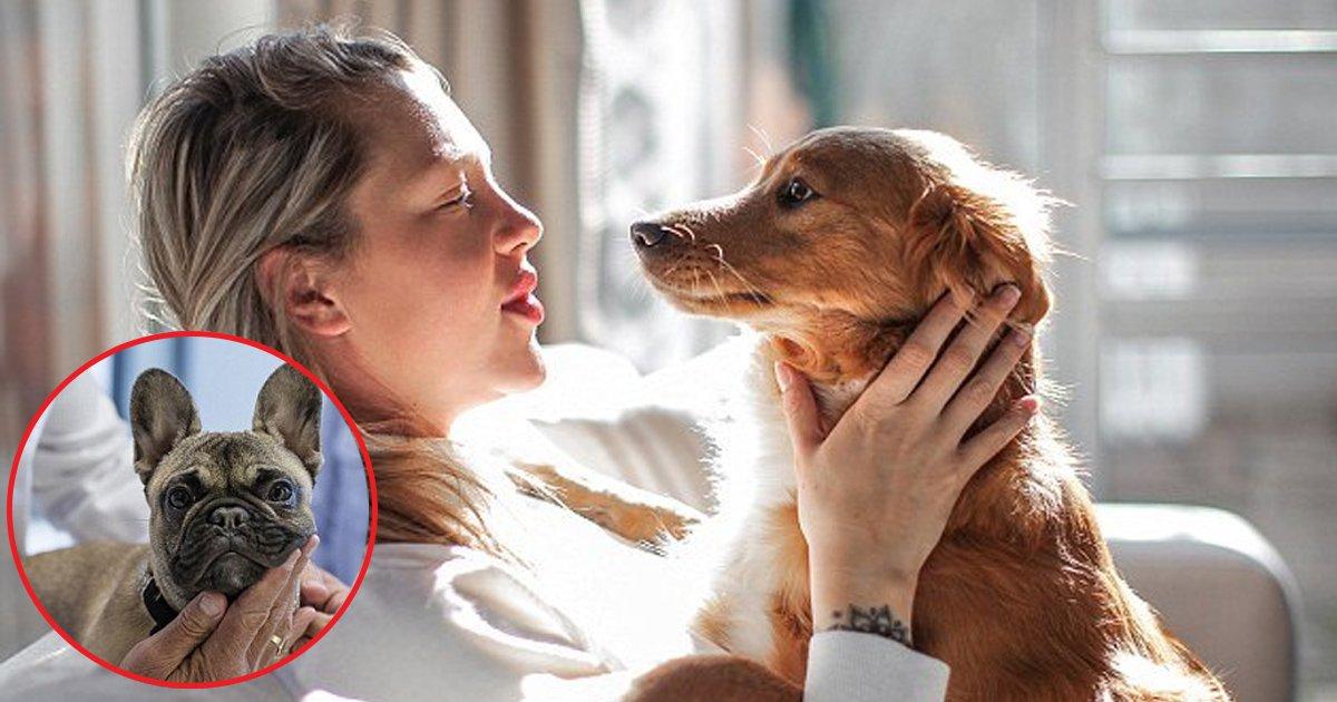 ffs.jpg?resize=412,232 - Des vétérinaires divulguent la réalité de ce que les animaux domestiques font dans leurs derniers moments de vie