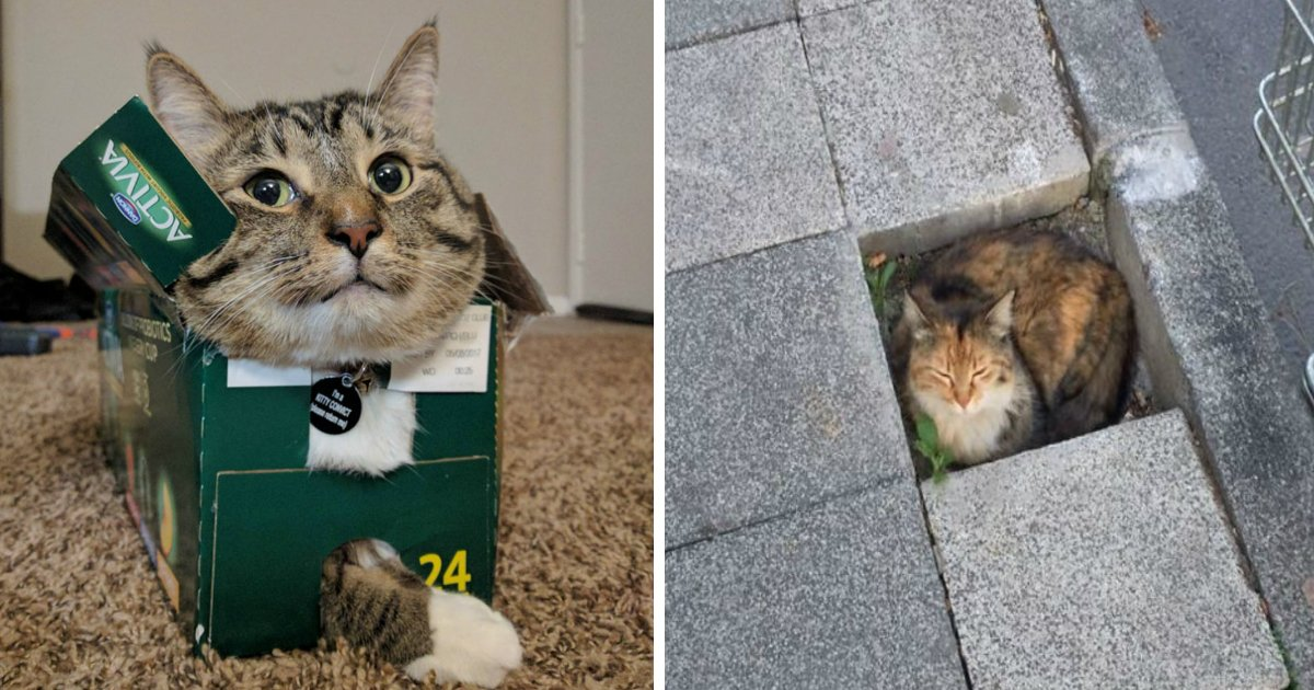 fit sit.jpg?resize=1200,630 - 30 Times Cats Proved That If It Fits, They Really Will Sit