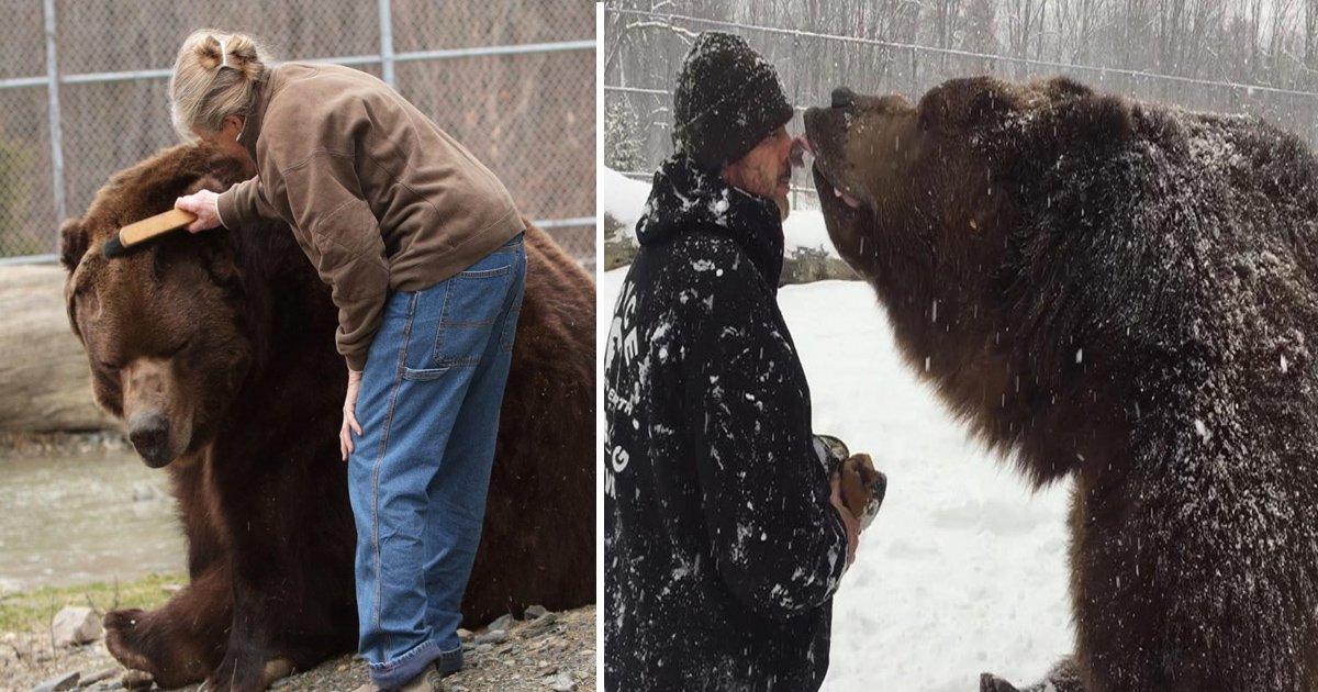 gddd.jpg?resize=1200,630 - Jimbo The Kodiak Bear Died After 20 Years Of Living With The Kowalczik Family