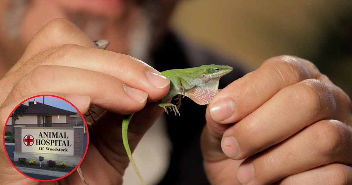ggga.jpg?resize=648,365 - Parents Never Expected Their Son's Pet Lizard To Do This. What Follows Is Hysterical