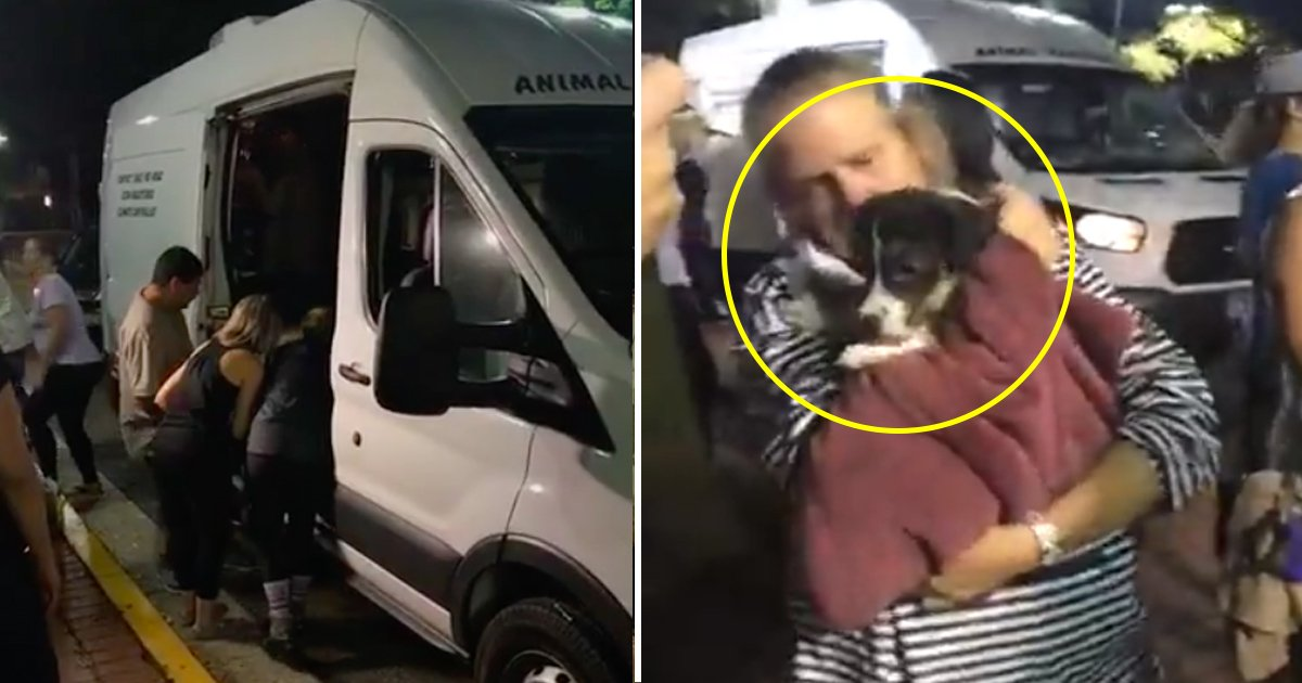 gsgsg.jpg?resize=636,358 - Beautiful Footage Shows A Group Of People Coming Together To Rescue Dogs And Cats Abandoned In A Hurricane Evacuation