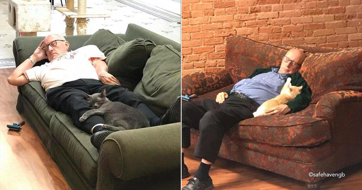 hombregato.jpg?resize=300,169 - Un hombre de 75 años se ofrece todos los días como voluntario para tomar siestas con los gatos de un refugio de animales