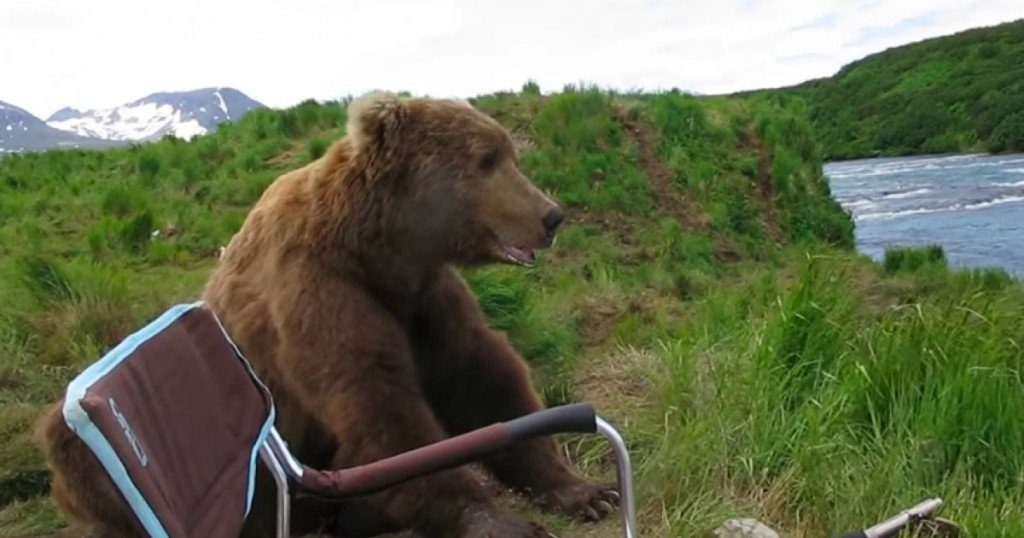 img 5b92f9c8ee155.png?resize=412,232 - 大棕熊河邊散心,一屁股坐攝影師旁邊:「第一次來?我家很美齁~」