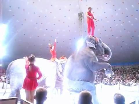 img 5baaa41a375de 1.png?resize=412,232 - 「大象表演失足」從高處摔落,同伴秒上前關心...網友哭:抵制馬戲團!