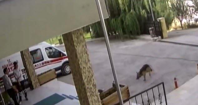 injureddog-1