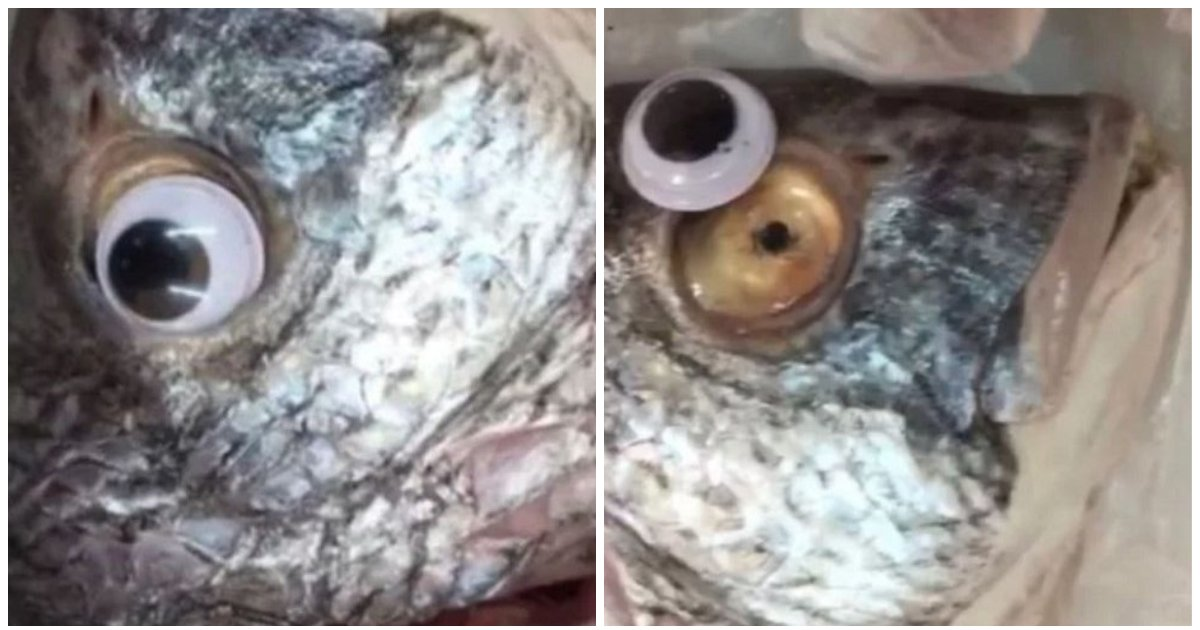 layout 2018 9 10.jpg?resize=300,169 - '가짜 눈알'을 붙여 싱싱한 생선처럼 속여 판 생선가게 주인