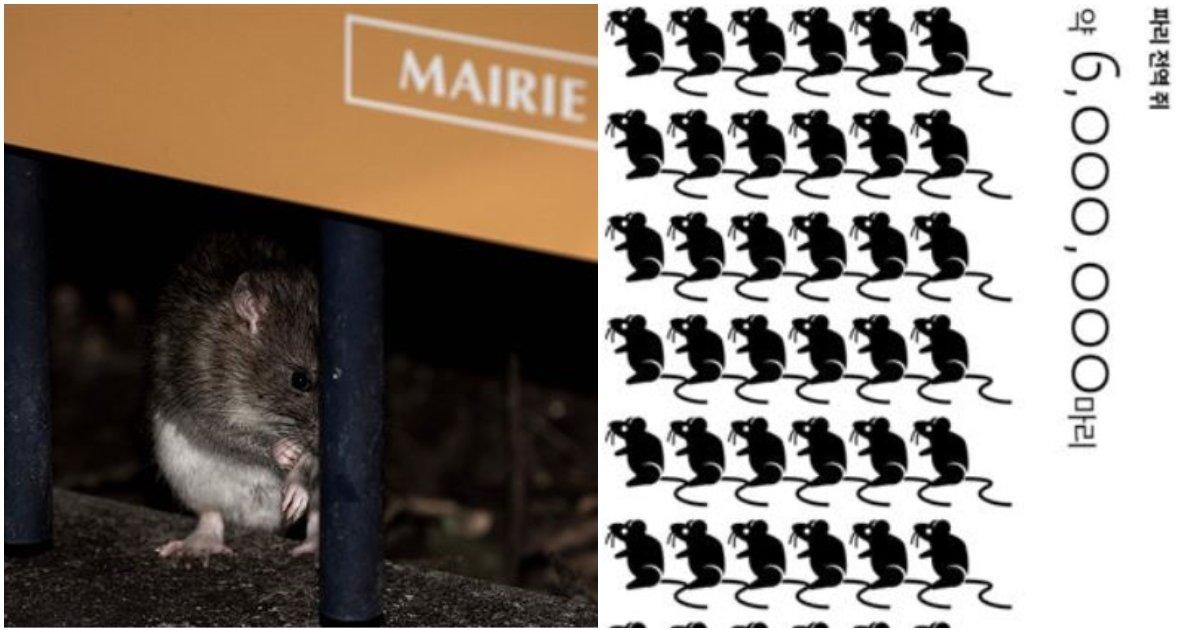 layout 2018 9 17.jpg?resize=300,169 - 파리 인구보다 많은 쥐들의 습격에 '골머리' 앓고 있는 프랑스 정부