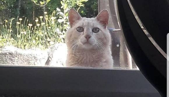 「足の不自由な猫 置き手紙」の画像検索結果