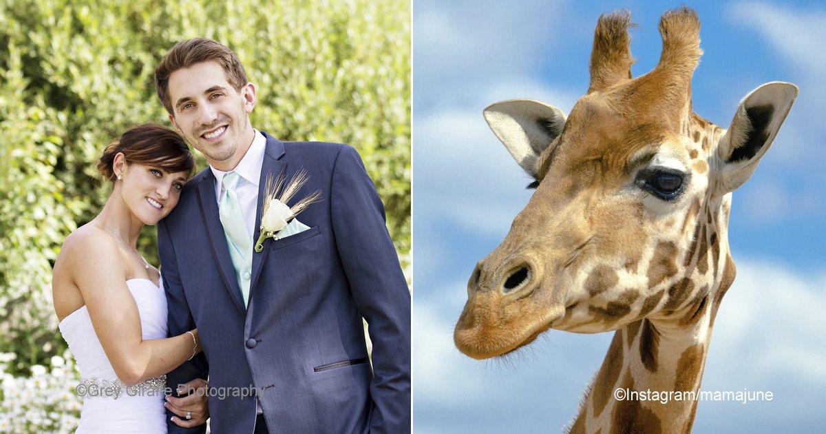 macro 1.jpg?resize=300,169 - La jirafa apareció en las mejores fotos de la boda, aunque no había sido invitada