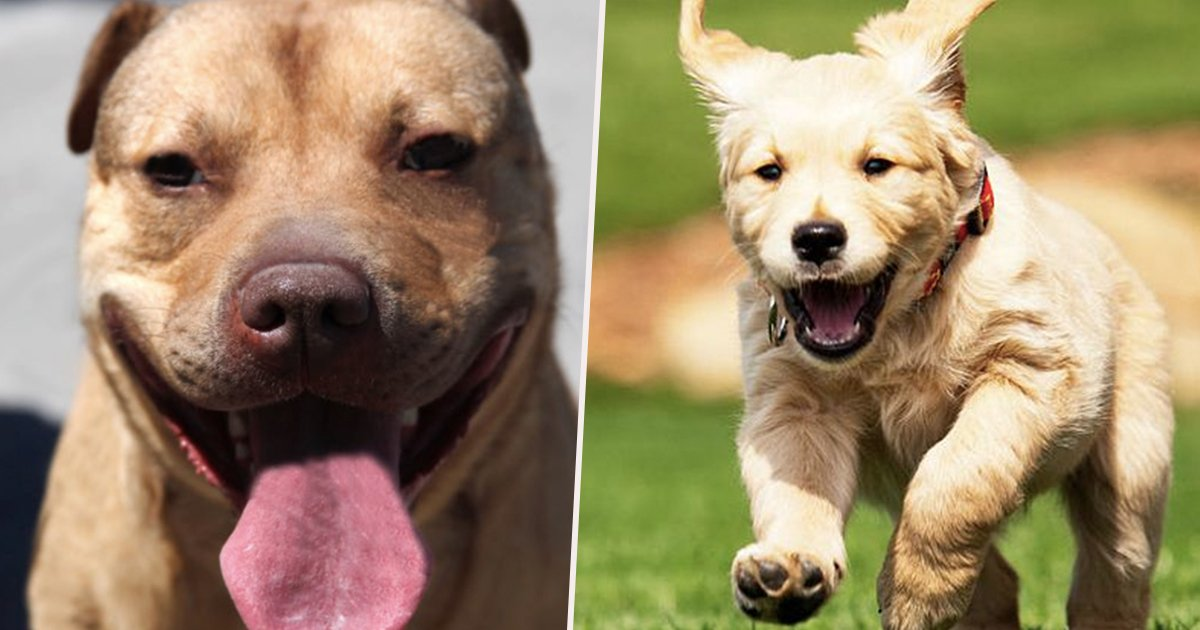 main 7.jpg?resize=636,358 - 10 Dogs Were Trained For Practical Purposes But What They Did Instead Will Make You Say They Are REALLY CUTE