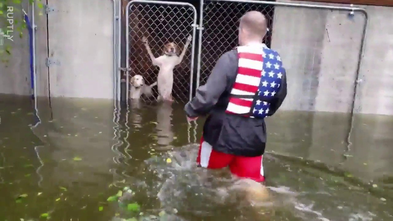 main 9.jpg?resize=636,358 - Hurricane Florence: Volunteers Rescue Abandoned Dogs from Rising Florence Floodwaters