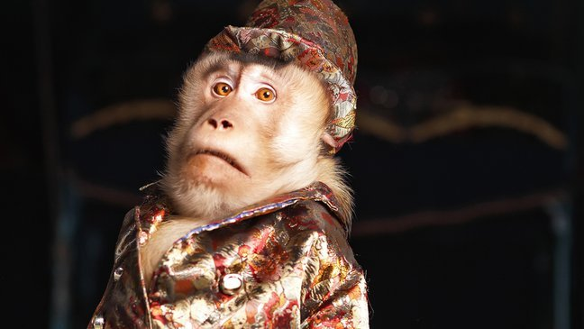 mainphoto italie.jpeg?resize=636,358 - L'Italie se prononce pour l'interdiction des animaux sauvages dans les cirques.