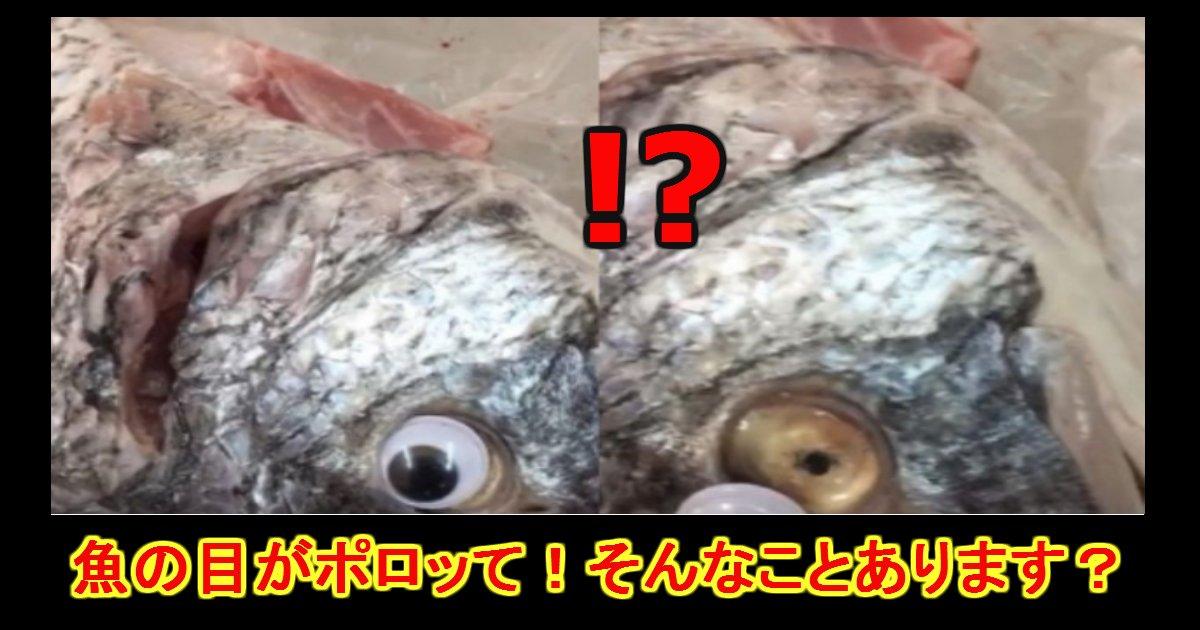 me.png?resize=412,232 - 魚の目がギラつきすぎじゃね?と思ったら人形の目がくっついていた件
