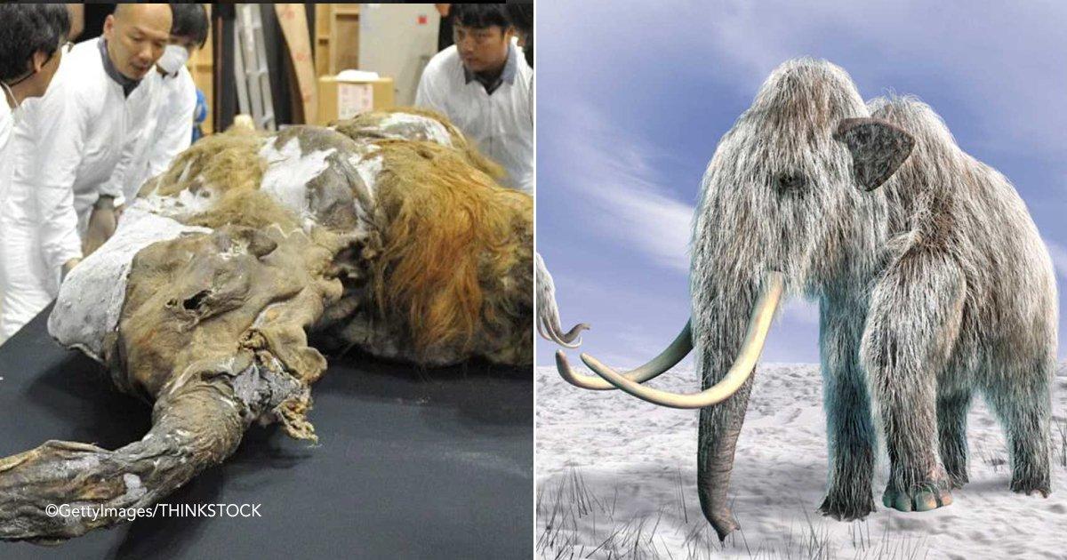 mumy.jpg?resize=412,232 - En Rusia quieren abrir una instalación de clonación estilo Parque Jurásico para revivir especies extintas