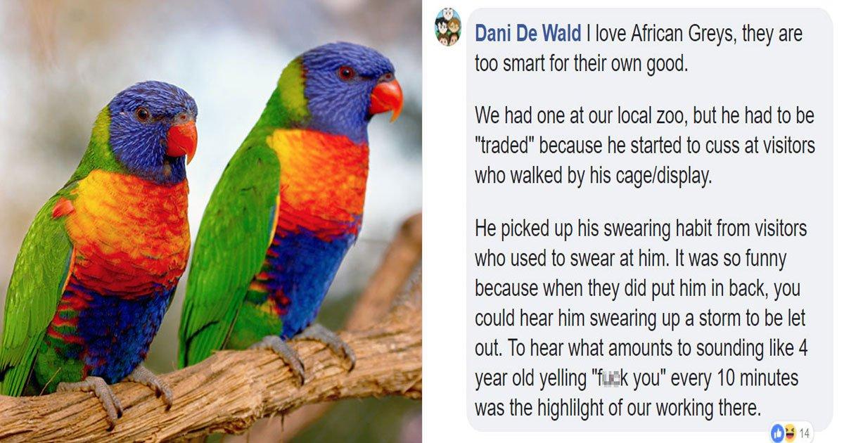 parrots stories.jpg?resize=300,169 - Les perroquets sont HILARANTS, et les internautes sont là pour le prouver