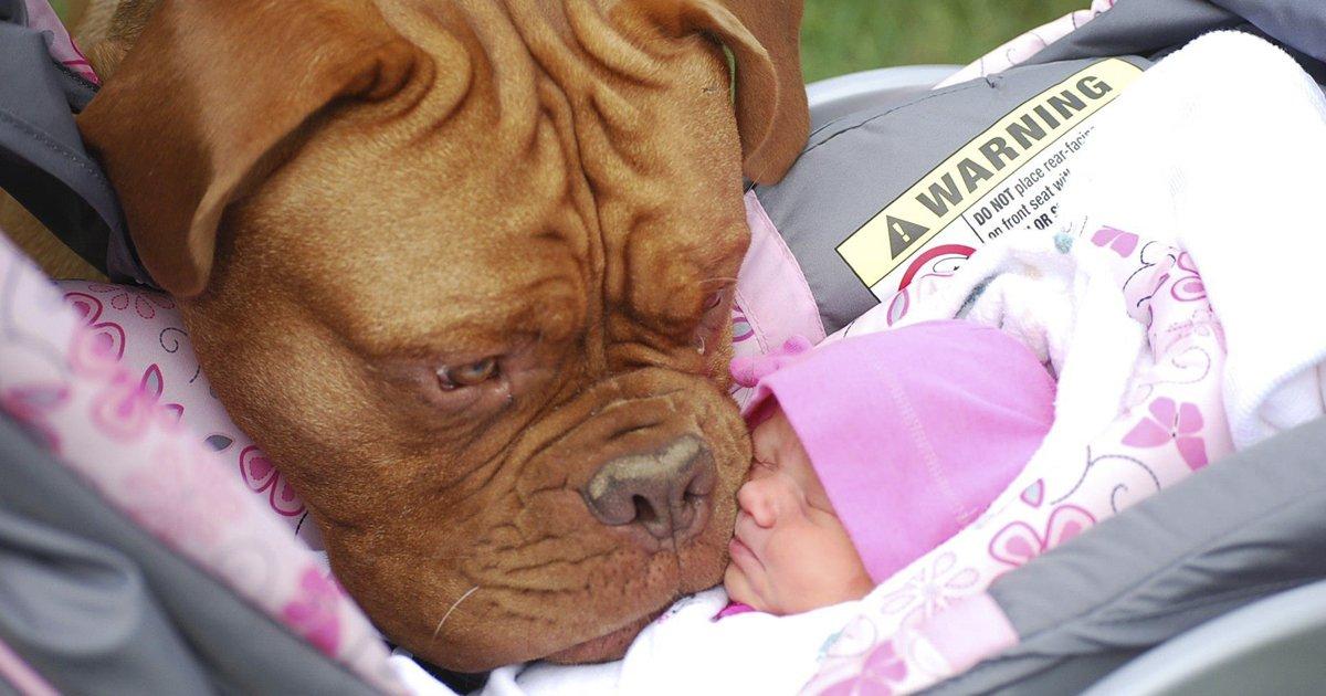 perros 1.jpg?resize=1200,630 - Los perros nos muestran lo que es el amor incondicional a diario, y no dejan de asombrarnos