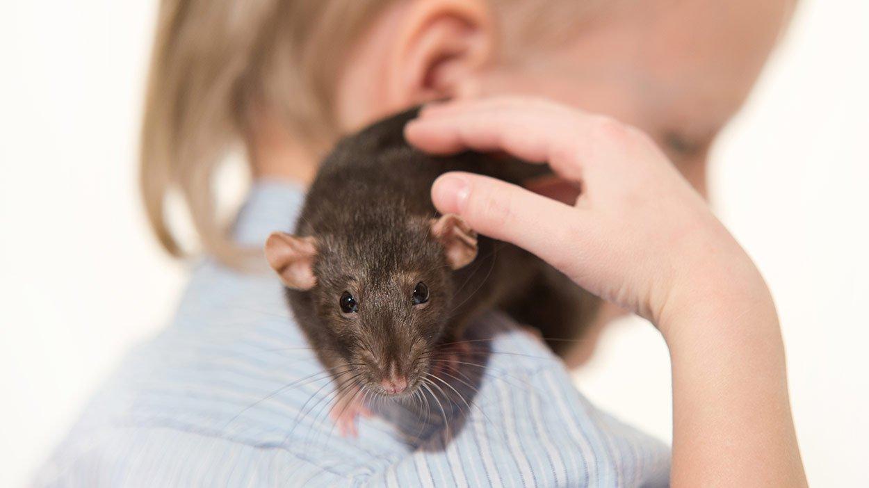 pet rats header.jpg?resize=1200,630 - Estudo diz que crianças são mais felizes tendo um rato de estimação do que cães ou gatos