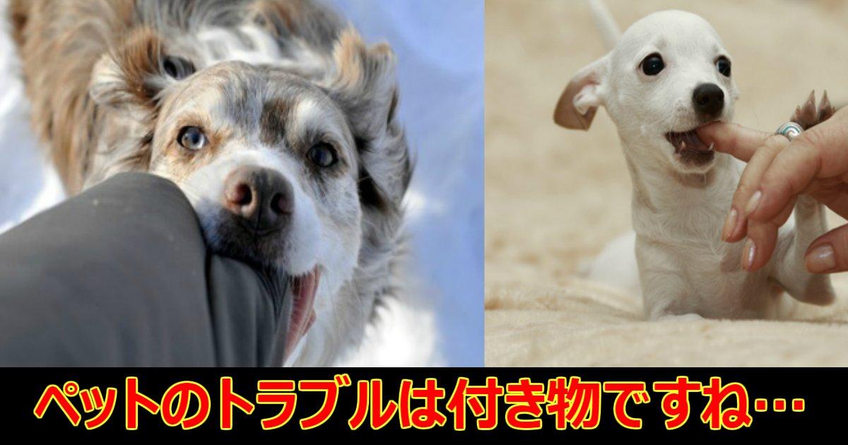 pet.png?resize=412,232 - 通行人に噛みつき蹴られて死んでしまったペットの飼い主「あの女はサイコパスみたいだ」
