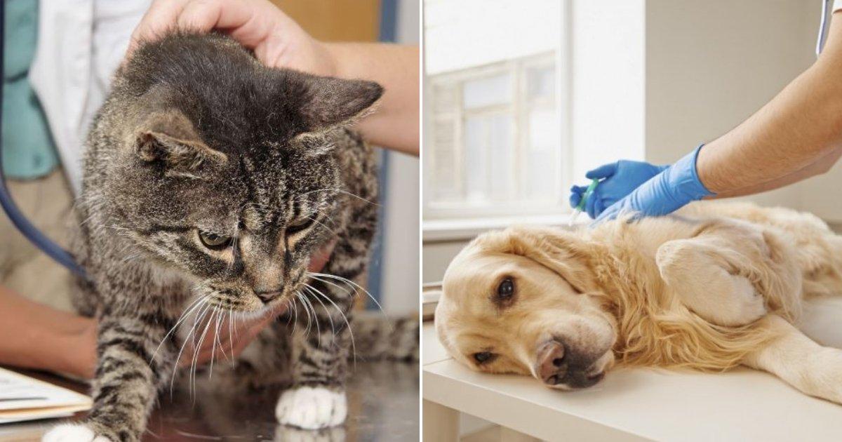 pets.png?resize=412,232 - Veterinários revelam o que os animais de estimação sentem antes de serem sacrificados