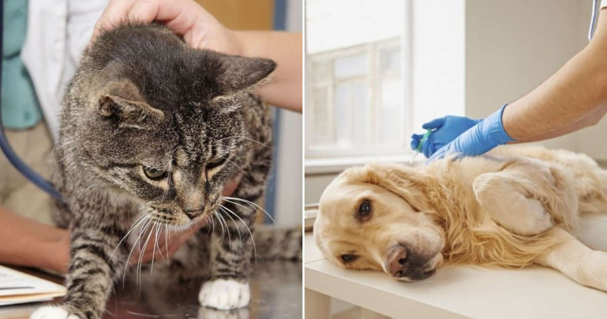 pets.png?resize=412,275 - Vets Reveal What Pets Do Before Being Euthanized, And It's Something Every Pet Owner Must Know