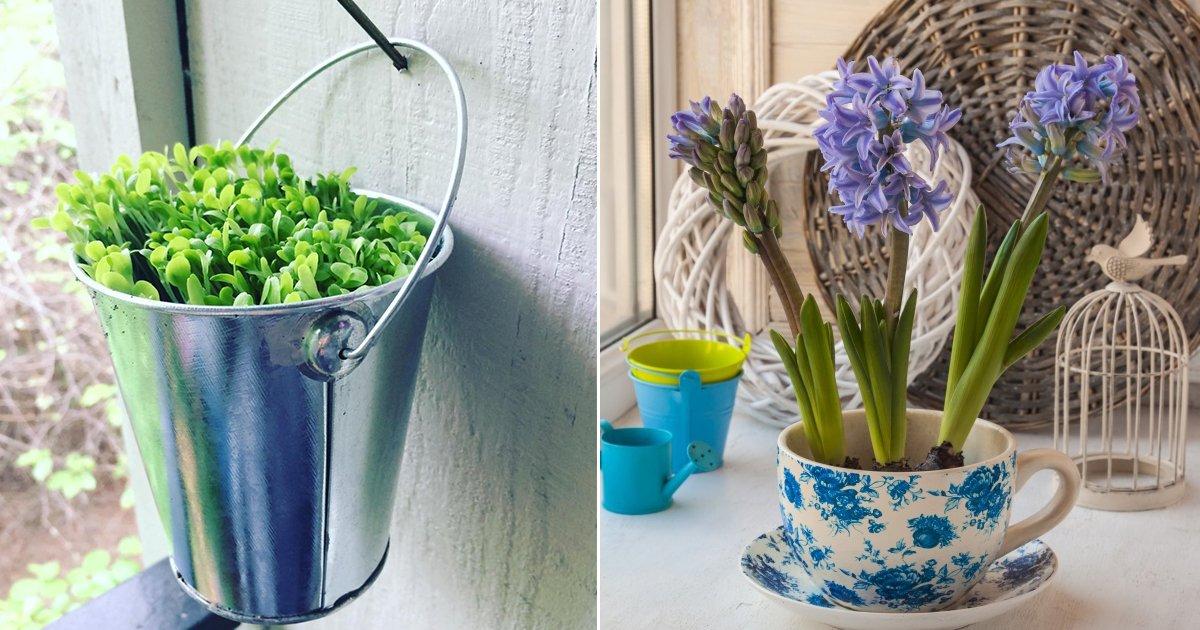 planta.jpg?resize=1200,630 - 18 Maneras de hacer un jardín en tu casa