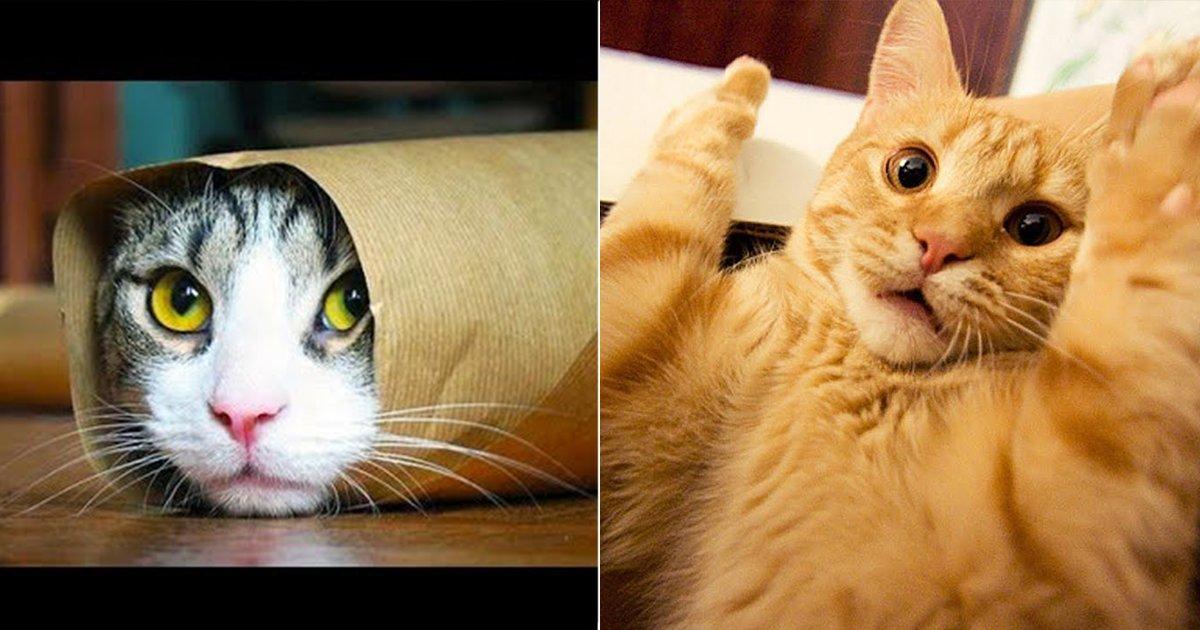 port 1.jpg?resize=412,275 - 23 Gatos que le enseñarán al mundo sus reglas de vida