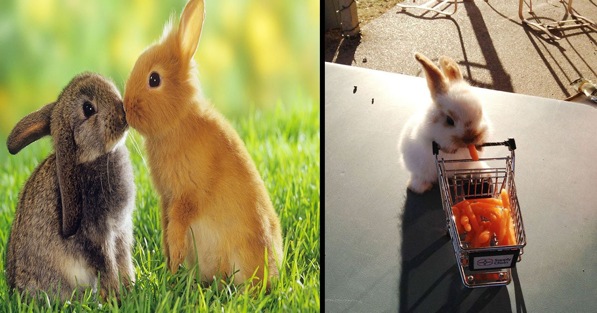 rabbit most adorable pictures.jpg?resize=1200,630 - 25 Most Adorable Photos Of Rabbits That Will Make You Want To Have Them As Your Pet