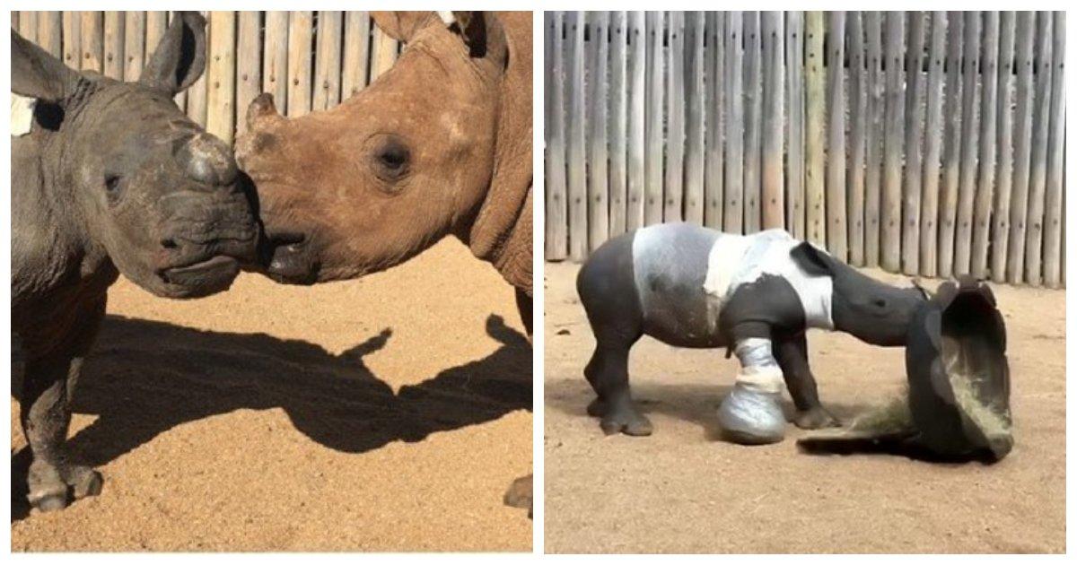 rhino.jpg?resize=636,358 - Une photo déchirante montre un jeune rhinocéros aux côtés de sa mère tuée pour ses cornes