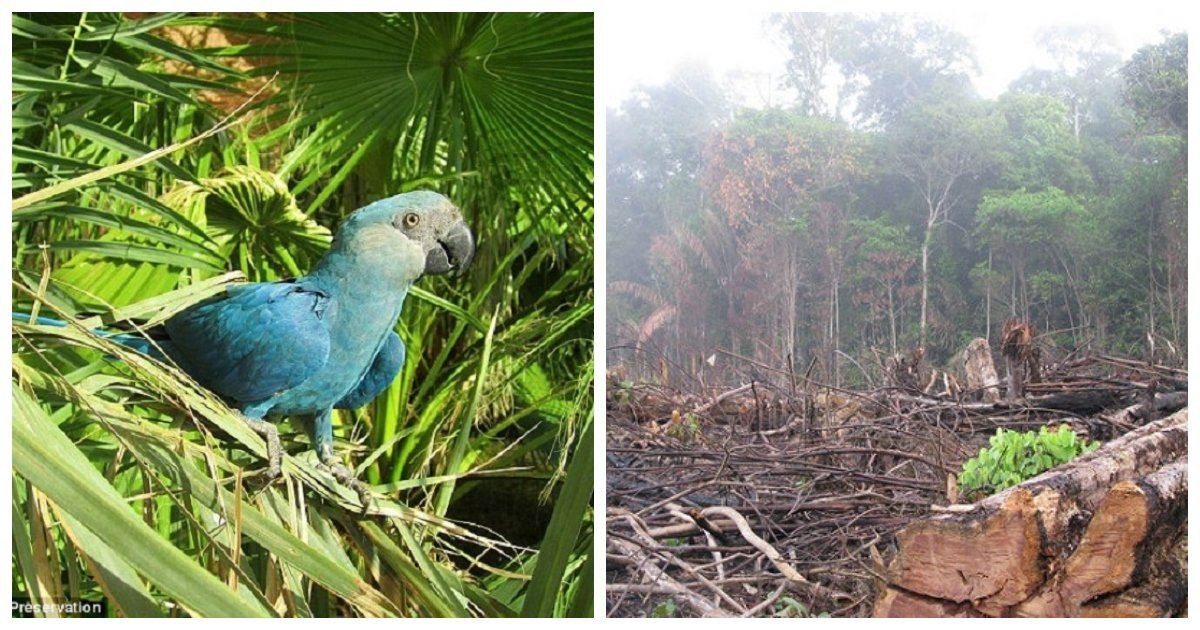 rio.jpg?resize=1200,630 - Spix's Macaw, Seen In The Animated Film Rio, Is One Of 8 Species That Have Gone Extinct This Decade