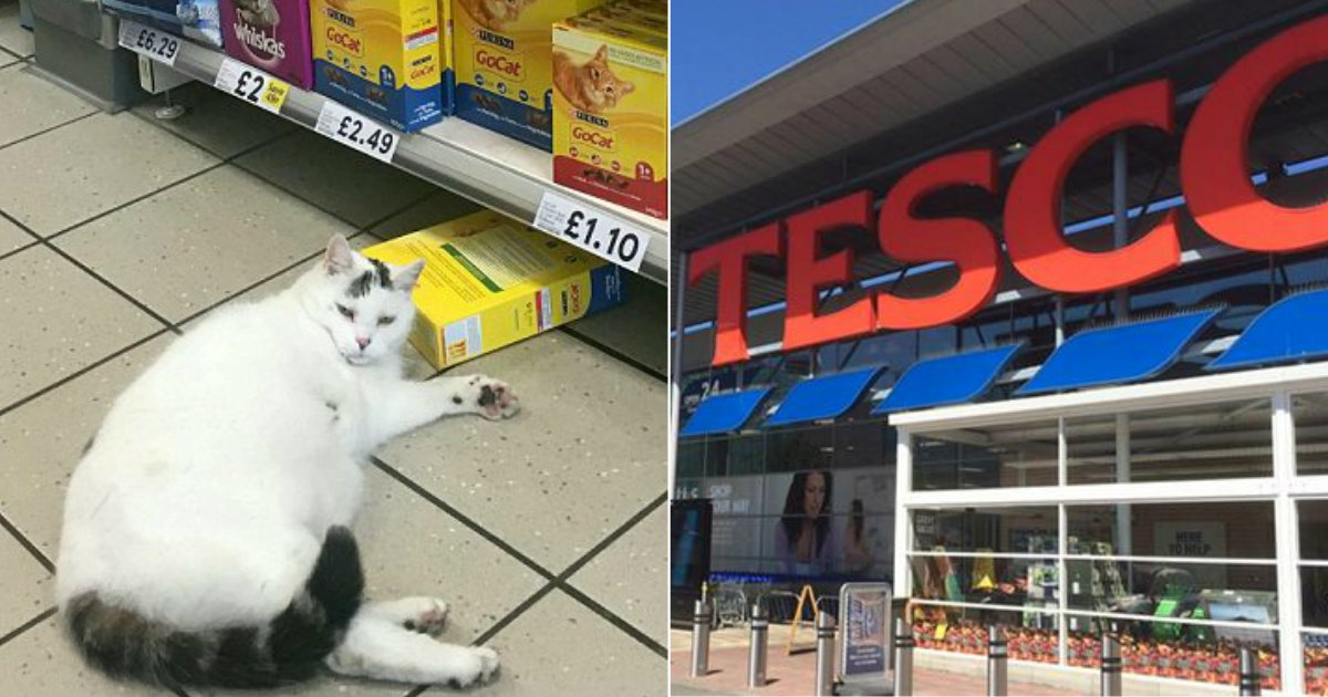 sneak tesco.jpg?resize=636,358 - Hungry Cat Sneaks Into Tesco And Takes A Nap After Stealing Food