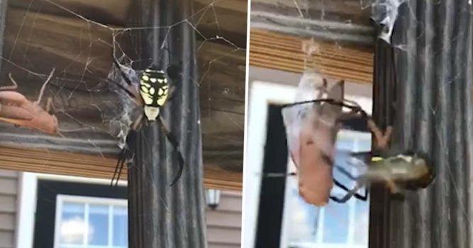 거미 -1