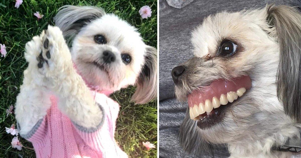 sss 1.jpg?resize=1200,630 - Le sourire d'un chien conquit Internet! Un homme trouve son chien avec sa prothèse dentaire après une sieste