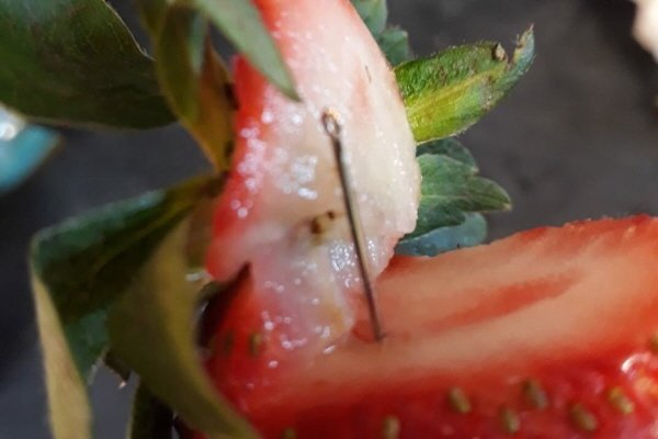 호주 딸기 사과 바늘에 대한 이미지 검색결과