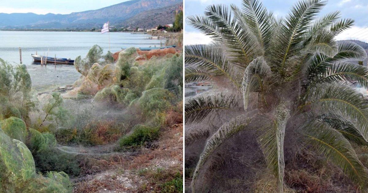 telaasna.jpg?resize=412,232 - Una telaraña gigante está cubriendo la costa en Grecia