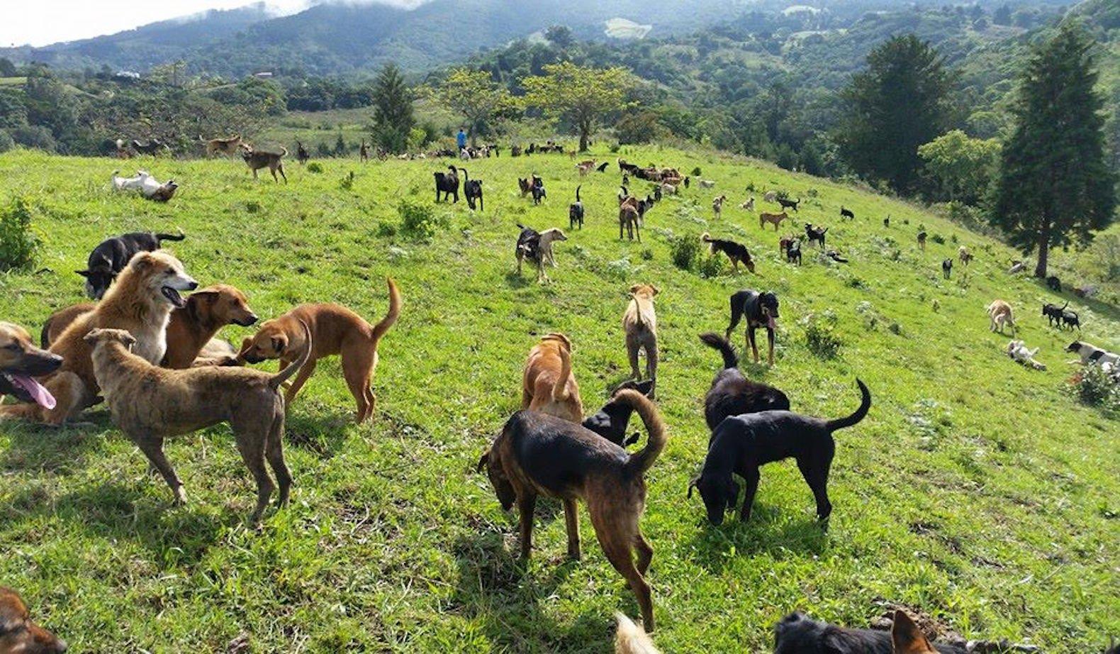 territorio de zaguatas dog paradise in costa rica 2.jpg?resize=1200,630 - Ilha na Costa Rica abriga mais de 900 cãezinhos abandonados