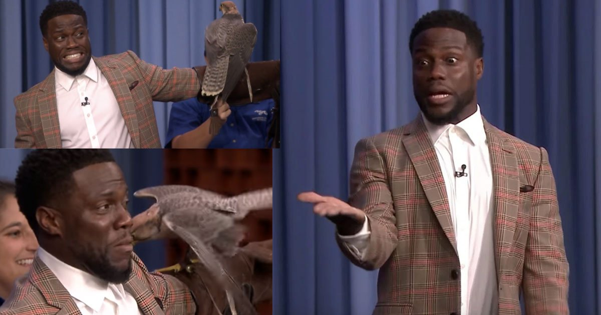 the video of kevin hart terrified of robert irwins animals and running across the stage is too hilarious.jpg?resize=636,358 - The Video Of Kevin Hart Terrified Of Robert Irwin's Animals And Running Across The Stage Is Too Hilarious