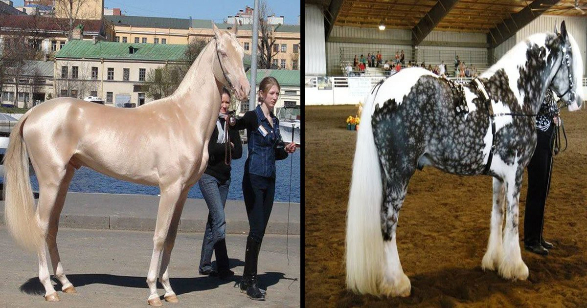 unique color horses in the world.jpg?resize=636,358 - The Most Beautiful And Unique Horses In The World