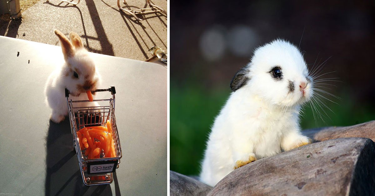 untitled 1 44.jpg?resize=412,232 - Celebrating International Rabbit Day: The Cutest Bunnies Ever