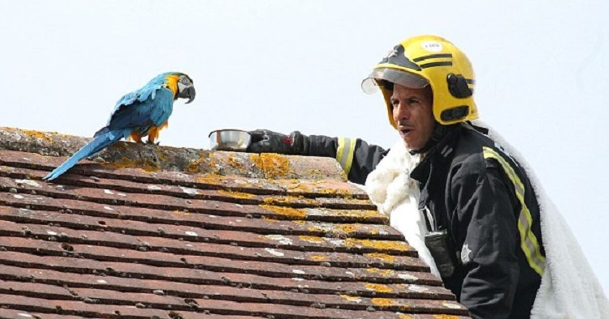 untitled design 100.png?resize=412,232 - Parrot Who Escaped From Owner's Home Told Firefighters To F- Off After They Tried To Rescue It