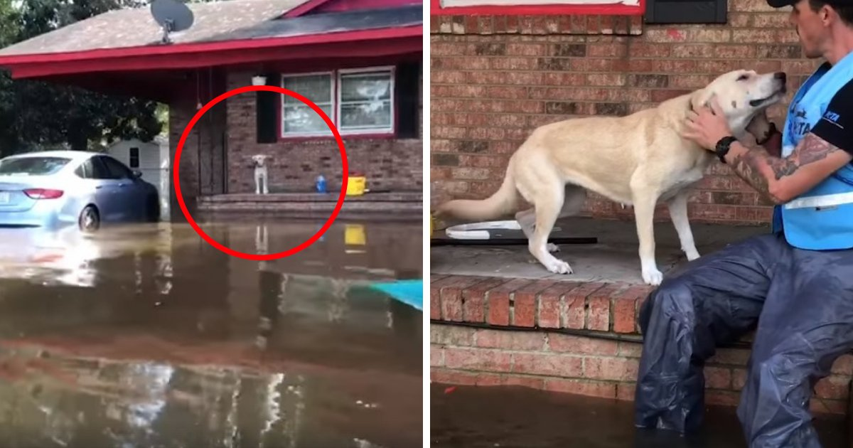 untitled design 18 2.png?resize=366,290 - Dog Super Happy To See Rescuers After Getting Abandoned During Hurricane Florence