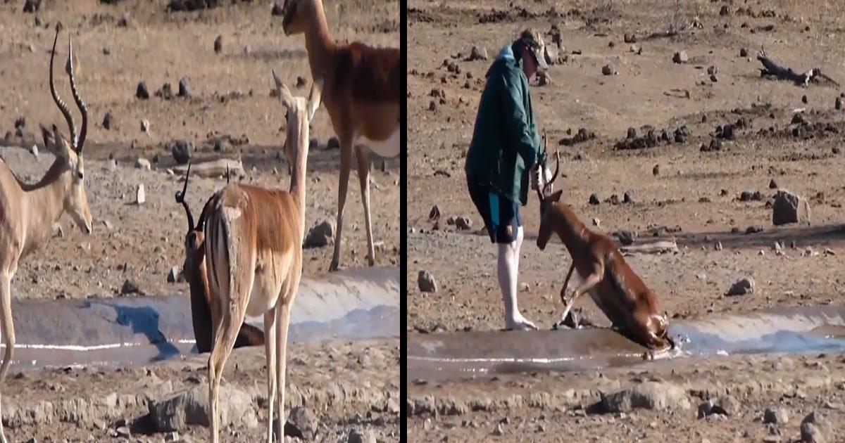 vbbn.jpg?resize=1200,630 - Vidéo réconfortante : un touriste britannique aide un impala à se sortir de la boue lors d'un safari