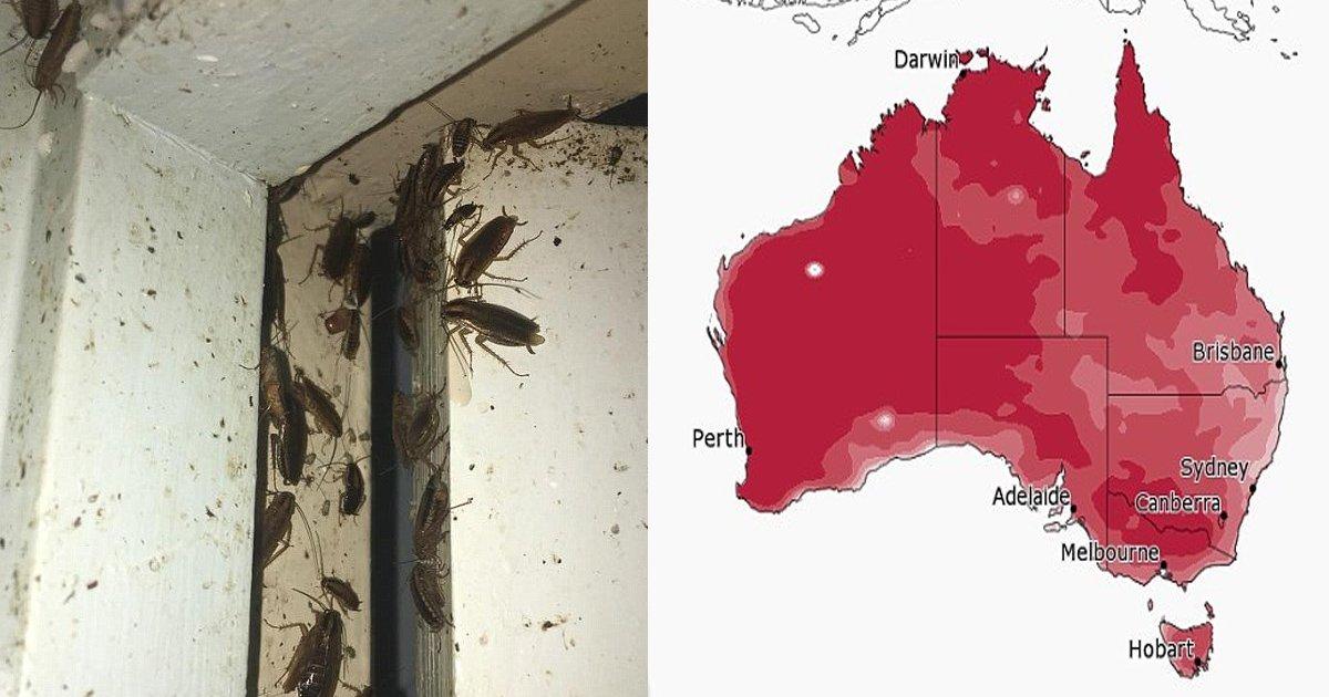 vgss.jpg?resize=1200,630 - Austrália está alertando moradores sobre uma peste de baratas. Não nas ruas, mas nas residências.
