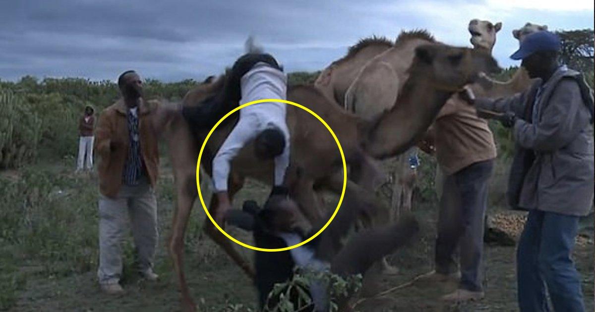 vv 1.jpg?resize=1200,630 - Roulant sur le sol en riant! Un chameau en colère jette un journaliste de la télévision kenyane et son assistant de son dos